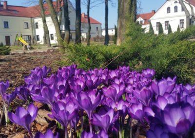 Wiosna w parku